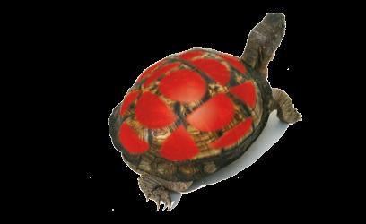 Image d'une tortue