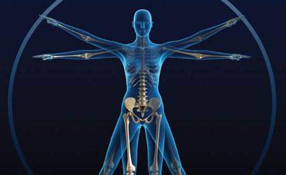 Image d'un corps humain (squelette).