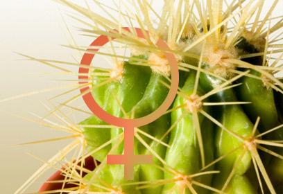 Illustration d'un cactus avec le pictogramme des femmes.