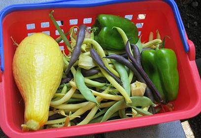 Panier de légumes.