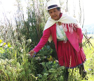 Isaura Arévalo Pugo dans son jardin de plantes médicinales.