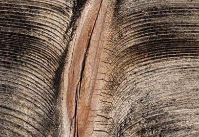 Fissure dans un arbre en motif de vulve..